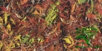 Пробковый пол с фотопечатью Ruscork, коллекция PrintCork Home Ambition