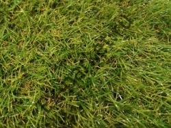 Искусственная трава GRASS MIX 30мм